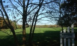 Pony Field
